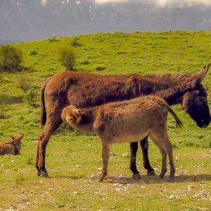 donkey-nature-sicily