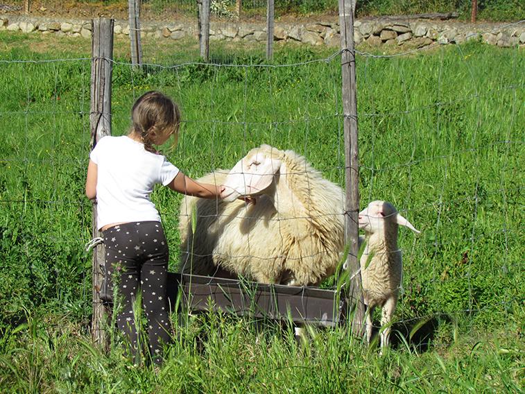 Farm-experience-sicily