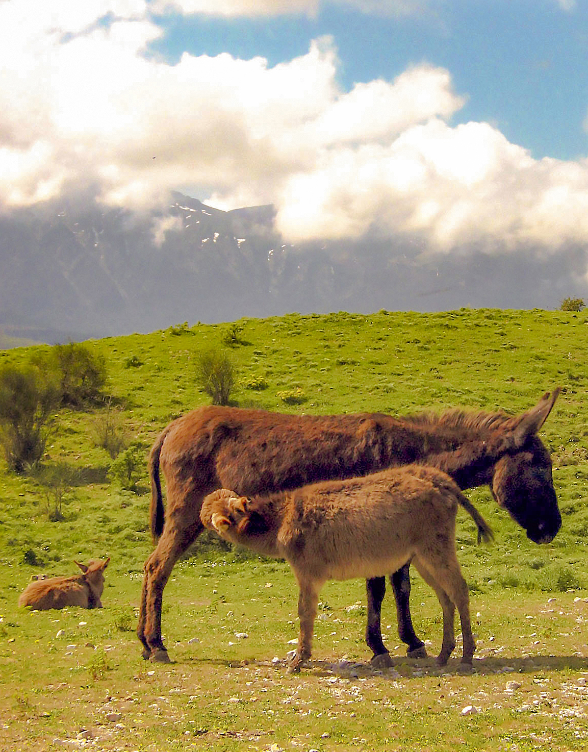 donkey-sicily-excursions-holiday